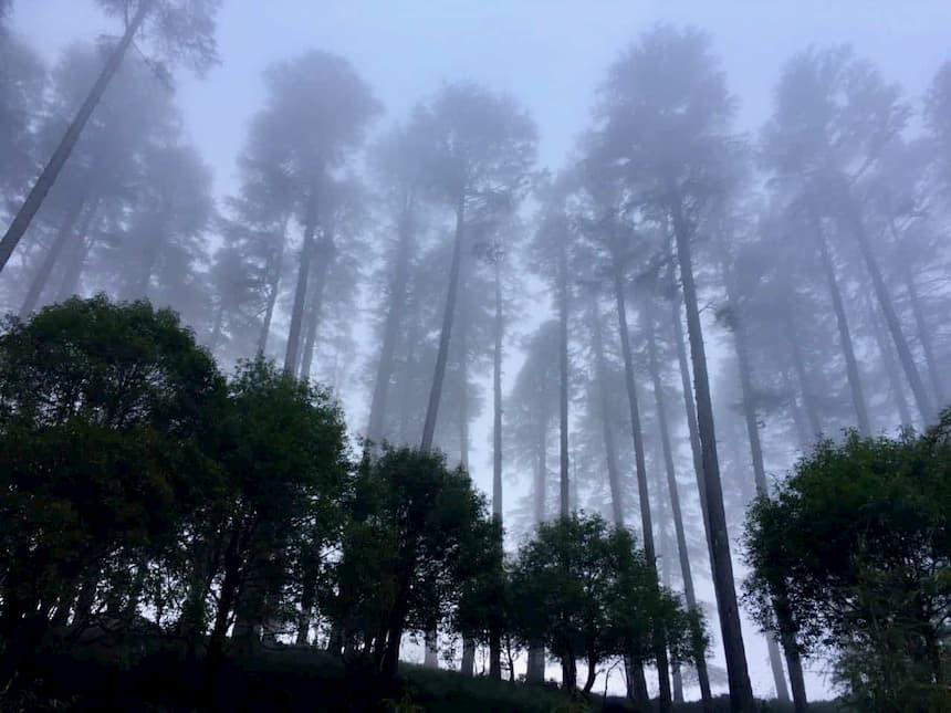 Mussoorie - Dhanaulti, Uttarakhand